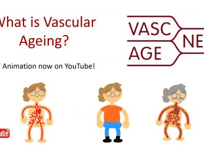 VascAgeNet Animation now available in English, German, French and Spanish!